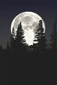 Wall Murals For Teenagers a full moon pictures photos and images for facebook