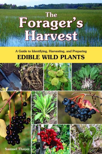Pdf Foragers Harvest Identifying Harvesting Preparing by The Forager S Harvest A Guide To Identifying Harvesting