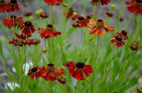 Garten Pflanzen Sommer by Kostenlose Bild Blume Natur Sommer Flora Feld Garten