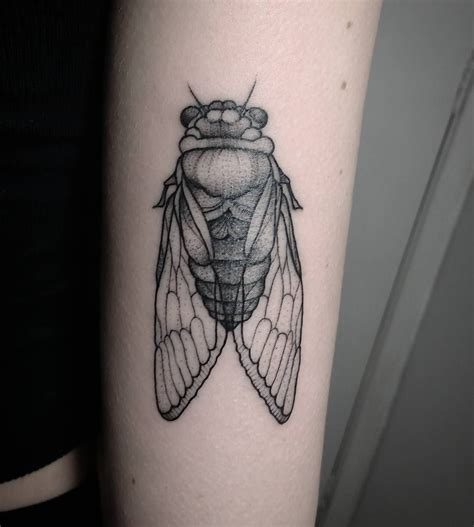 bug tattoos cigarra cicada de inseto insect