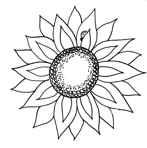 Sunflower Clip Outline by Sunflower Clipart Black And White Clip Clipart Black And White Flower And