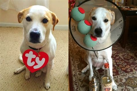 easy cheap diy halloween costumes   dog