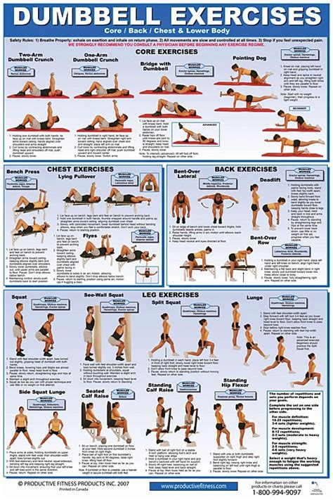 dumbbell chest back lower exercise poster