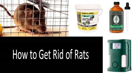 How To Get Rid Of Mice In Ceiling by Dealing With Rats Outside Your House Thriftyfun Home