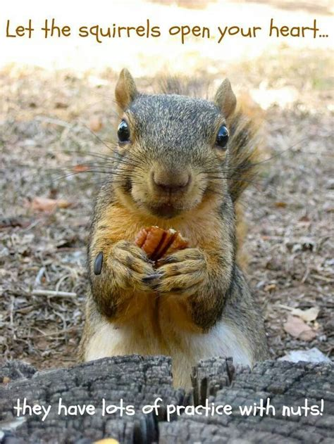 let me see you do the squirrel pin by laurie herndon on animals squirrel play