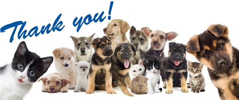 Your Pet by Thank You Pets Miami Veterinary Specialists