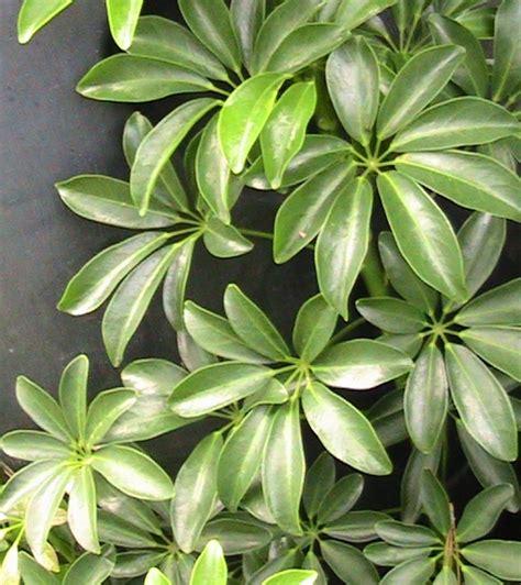Miracle Gro Indoor Garden - my back forty garden and park umbrella plants