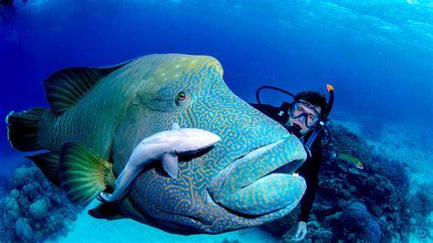 diving douglas abc scuba diving douglas prices
