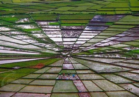 Crop Jaring 2 sawah jaring laba laba crop spider