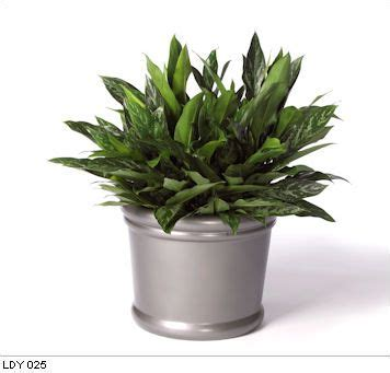 desk plants that don t need sunlight desk plants that don t need sunlight 28 images pin by
