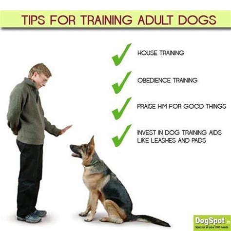 training a puppy to go to the bathroom outside how to train dogs to go to the bathroom outside 28