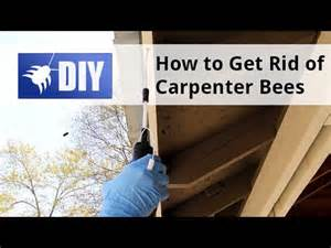 how to get rid of kill carpenter bees