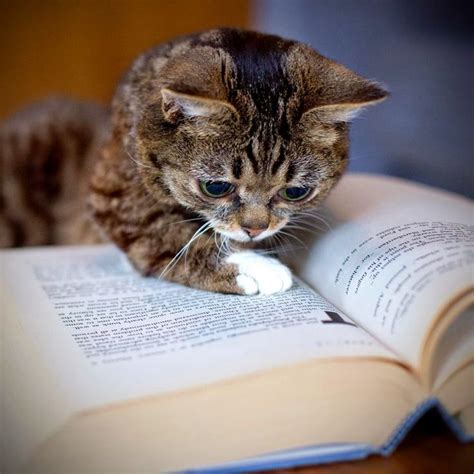 Cat And Books 580 best images about reading books and cats on