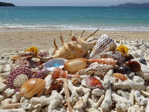 best beaches for seashells shell crafts i shelling