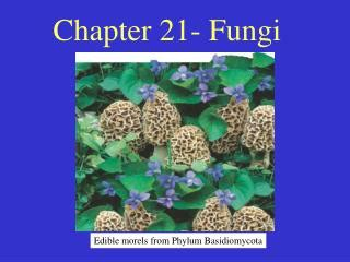 chapter 21 fungi section review 21 1 ppt zoosporic fungi phylum chytridiomycota powerpoint