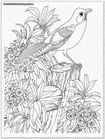 Realistic Coloring Pages bird coloring pages realistic realistic coloring pages