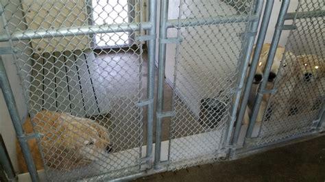 comfort kennels kennelpic comfort kennel pet care