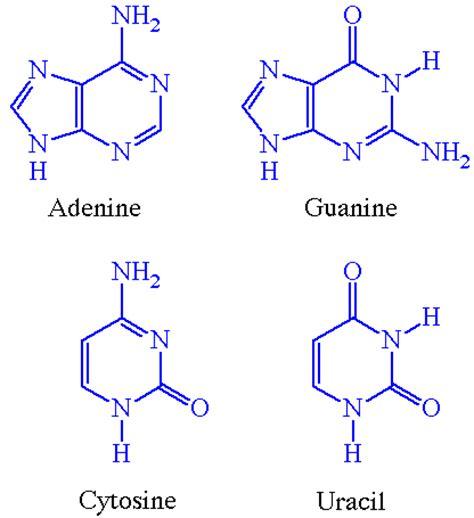 lon capa nucleicacids