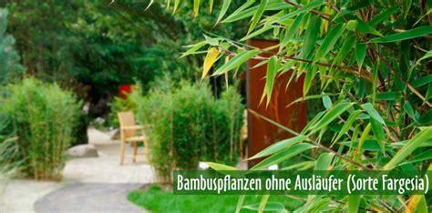 Gartenzubehã R Kaufen by Bambus Kaufen Bambuspflanzen Als Sichtschutz Bambus