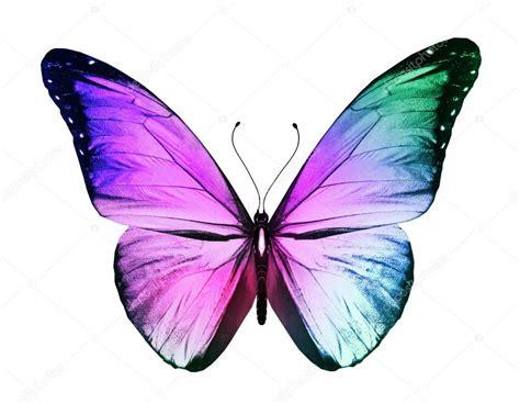 imagenes de mariposas a color mariposa de color aislado sobre fondo blanco foto de
