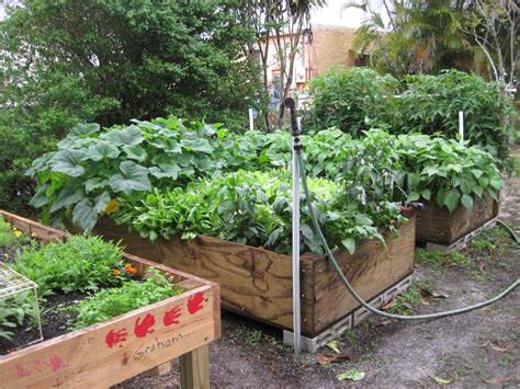 Soil Solarization For Raised Gardens Florida Vegetable Garden