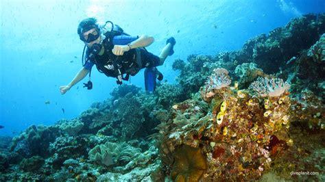 dive raja at diving blue magic raja at indonesia