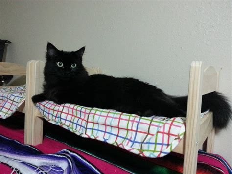Bunk Beds For Cats 15 Cats Who Believe Doll Beds Were Created For Them Purrtacular