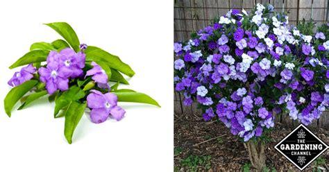 grow yesterday today  tomorrow plants