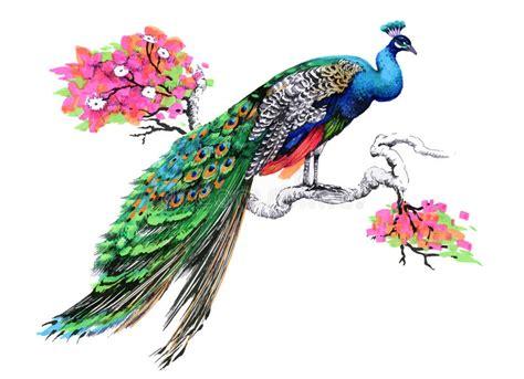 dibujo 233 tnico decorativo del pavo real blanco y negro pavo real del dibujo de la acuarela en rama de 225 rbol