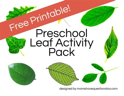 printable leaves for kindergarten leaf activities moms have questions too