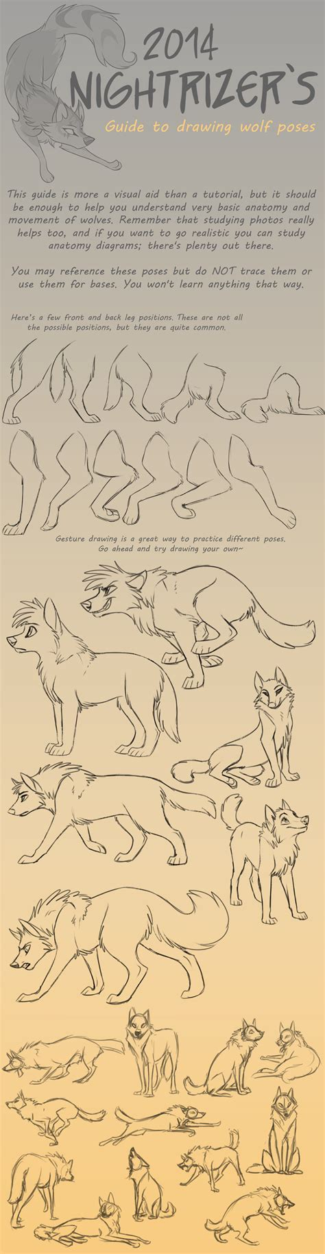 guide to drawing guide to drawing wolf poses by nightrizer on deviantart
