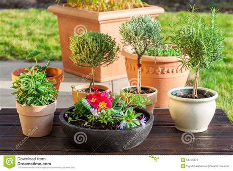 best flowers for small pots flower pots with herbs and flowers stock photo image