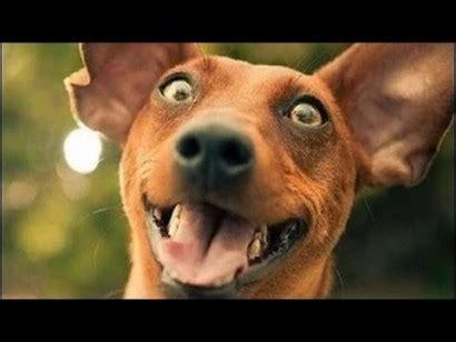 imagenes y videos graciosos los perros se rien y video de risa de perros