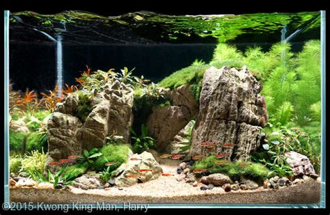 2015 aga aquascaping contest 479