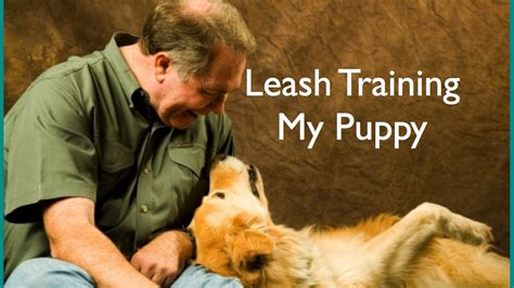 leash your puppy how to leash your puppy
