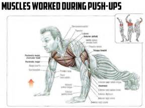 Muscles worked during push ups healthy fitness workout chest