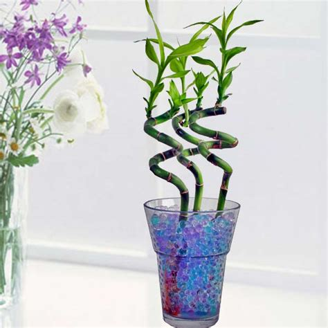 indoor plants singapore potted plant potted plants singapore