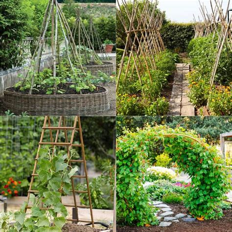 Vertical Gardening Structures 20 Favorite Flowering Vines For The Fence And Arbor A