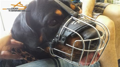 rottweiler cage size happy rottweiler in our lightweight wire cage muzzle m4 1073 light basket wire