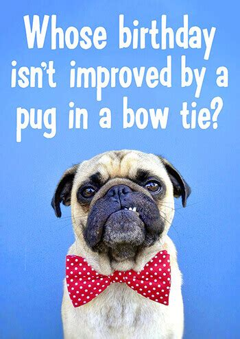 pug in a bow tie who s birthday isn t improved by a pug in a bow tie birthday card dma 229