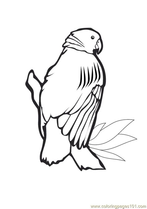 coloring pages of parrot fish parrot fish coloring page coloring pages