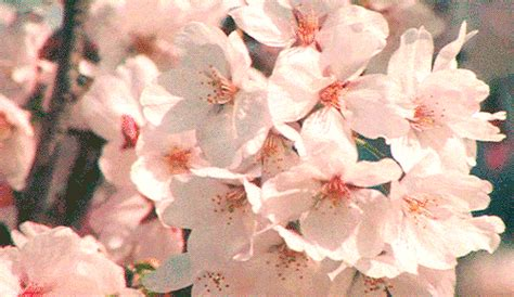 flower gifs images  animations