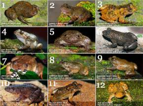 scientists find 12 new frog species and 3 believed to be