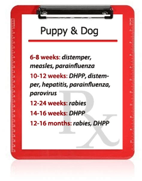 dhpp puppy vaccine everything you need to about pet vaccination
