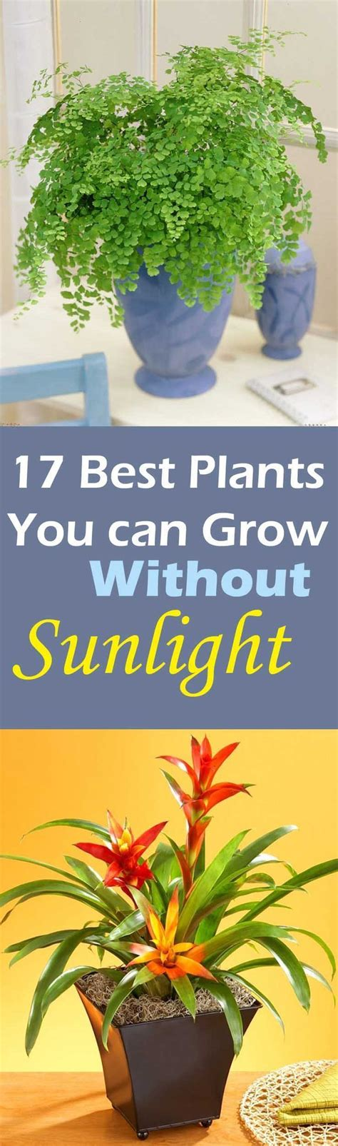 plants that grow in low light 1000 ideas about low light plants on plants spider plants and houseplant