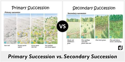 primary and secondary succession venn diagram ch 3 4 5 6 ecology