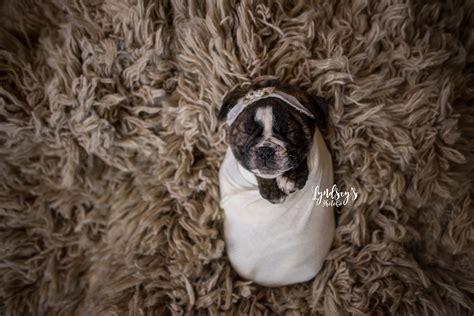 newborn puppy photoshoot bulldog puppy gets newborn photo shoot like human baby