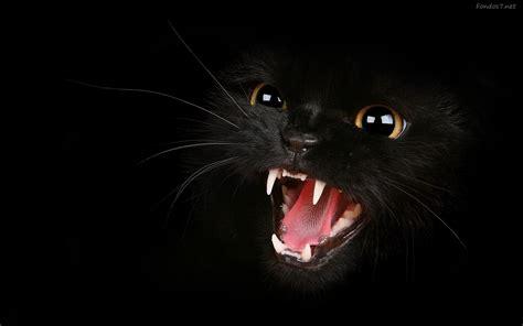 imagenes full hd para descargar gratis descargar fondos de pantalla un gato negro furioso hd