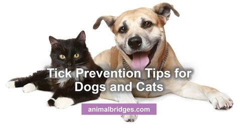 best tick prevention for dogs tick prevention tips for dogs and cats
