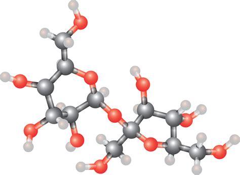 alimenti contengono coenzima q10 coenzima q10 quot energy boost quot riparatore nostro sistema